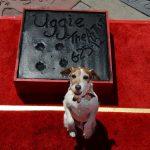 Uggie e os cãezinhos mais fofos do cinema