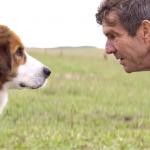 O trailer de Quatro Vidas de um Cachorro já emociona!