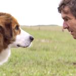 Vamos falar do filme do cachorro?