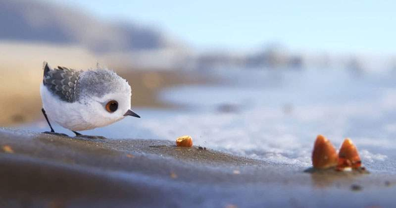 disney-pixar-short-film-piper