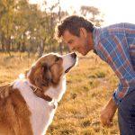 Sequência de 4 Vidas de um Cachorro também emociona